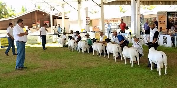 Valinhos (SP) sedia 1ª ExpoAgro e 11ª Nacional de ovinos Dorper